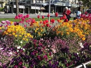 interlaken flowers