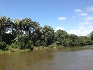 amazon plants brazil