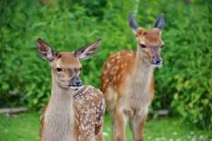 Ten Deer Resistant Plants Virginia Gardens
